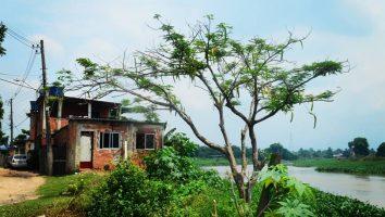 Comunidade Vila Alzira, população ribeirinha do Rio Iguaçu, São Bento